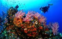 Discover diving and snorkelling in trips from Koh Samui